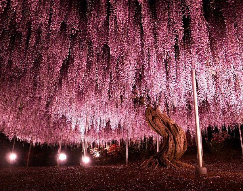 Les plus beaux arbres au monde – TravelerCar